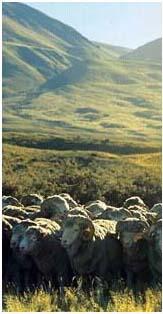 moutons-2.1179156390.jpg