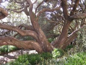 arbre-geneal.1188551291.jpg