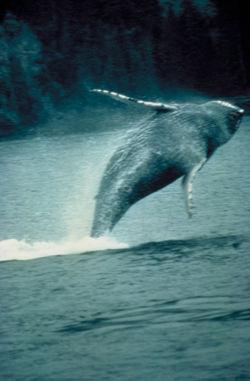 baleine.1186419359.jpg
